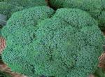 Cavolo Broccolo Calabrese F.1