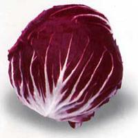 Radicchio o Cicoria di Chioggia (precoce, medio, tardivo)