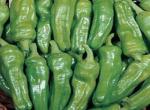 Peperone Friggitello