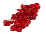 Ribes (bianco, rosso, nero)
