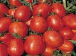 Pomodoro Rio Grande o Romano