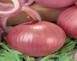 Cipolla Savonese rossa