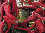 Peperone Sott'aceto